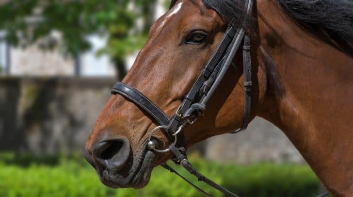 Das Pferd wurde vermutlich angeschossen und verendete an seinen schweren Verletzungen.