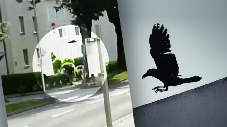 Heute wurde eine Villacherin von einer Krähe in der Magdalenerstraße attackiert. Ein Video zeigt den aggressiven Vogel-Angriff.