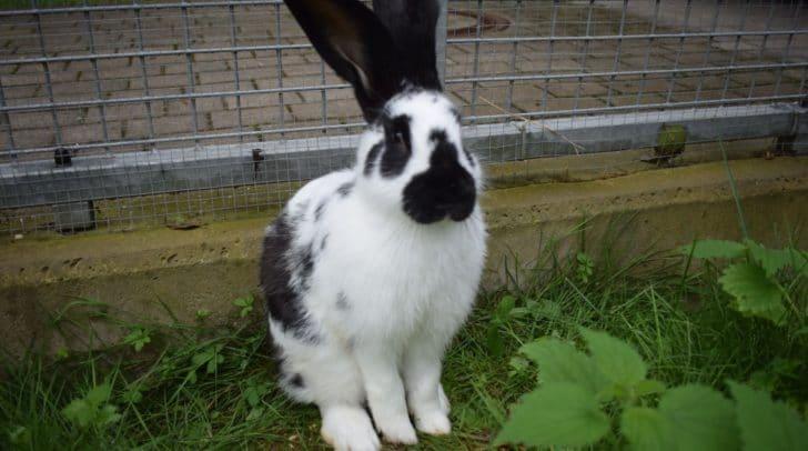 Kaninchen aufgefunden: Es wartet im Tierheim auf seinen Besitzer.