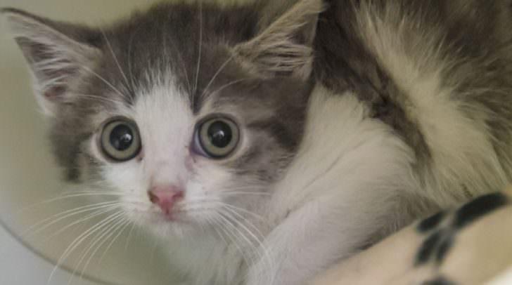 Schüchterne Katze sucht eine geduldige Familie.