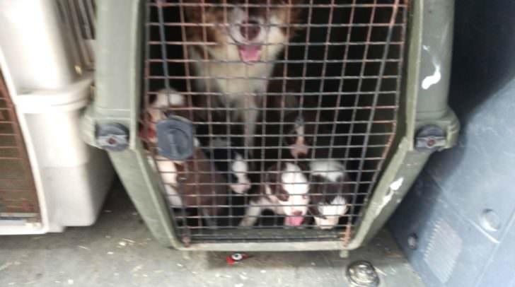 Hund samt Welpen mussten bei den heutigen über 30 Grad über eine Stunde ausharren