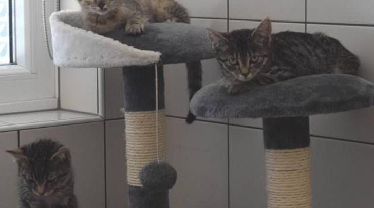 Diese Katzenbabys suchen einen neuen Besitzer.