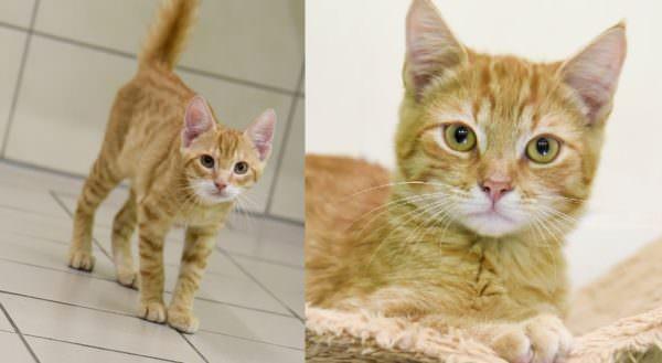 Katzenglück im Doppelpck: Pooh (links) und Jimny (rechts) sind unzertrennlich und wollen am liebsten gemeinsam ein neues zu Hause finden.