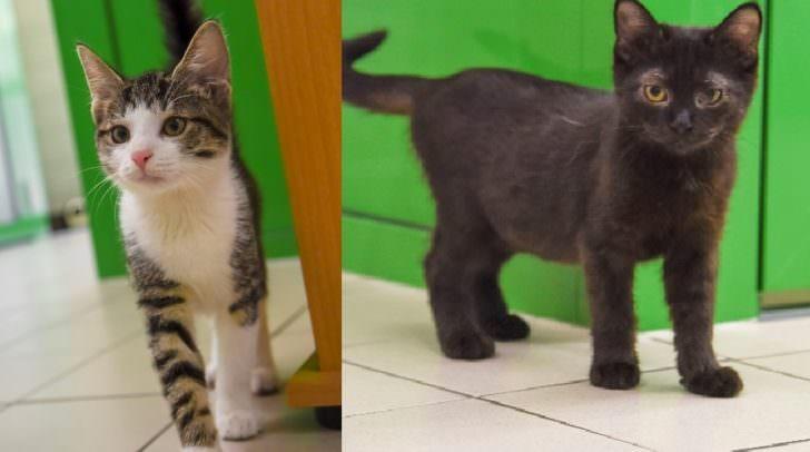 Katzenglück im Doppelpck: Kimi (links) und Asra (rechts) sind unzertrennlich und wollen am liebsten gemeinsam ein neues zu Hause finden.