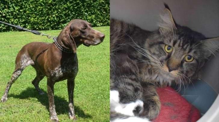 Rumba und Vincent warten im Tierheim Villach auf ein neues Zuhause.