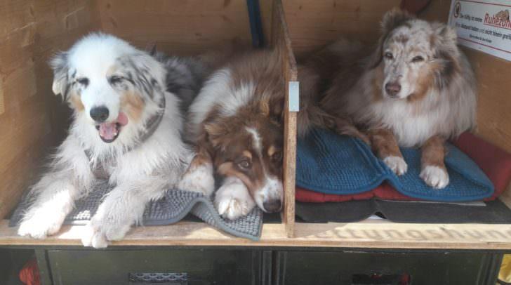Erfolgreicher Einsatz der Rettungshundestaffel des Samariterbunds