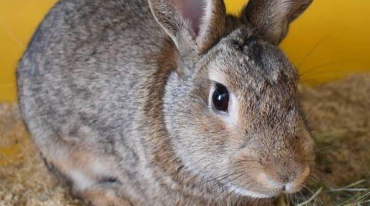 """Das süße Kaninchen """"Keks"""" sucht einen neuen Kuschelplatz."""