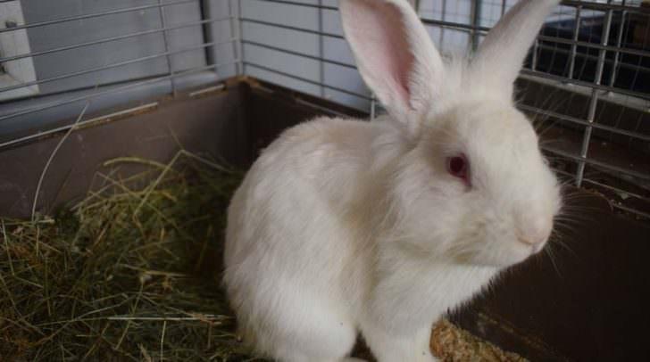 Eines von mehreren Kaninchen, das derzeit auf einen neuen Platz zum Leben wartet