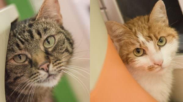 Die Katzen Cookie und Strolchi würden sich über ein neues gemeinsames zu Hause sehr freuen.