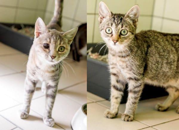 Die verspielten Katzen Tilda und Mila suchen ein gemeinsames zu Hause.