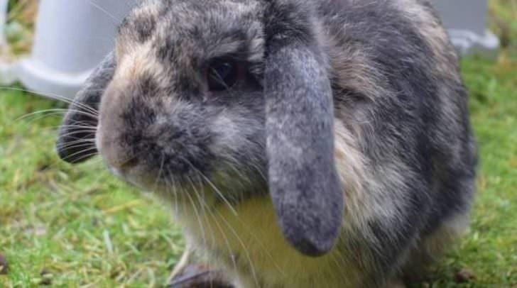 Im Tierheim Villach gibt es viele süße Kaninchen, die ein neues zu Hause suchen.