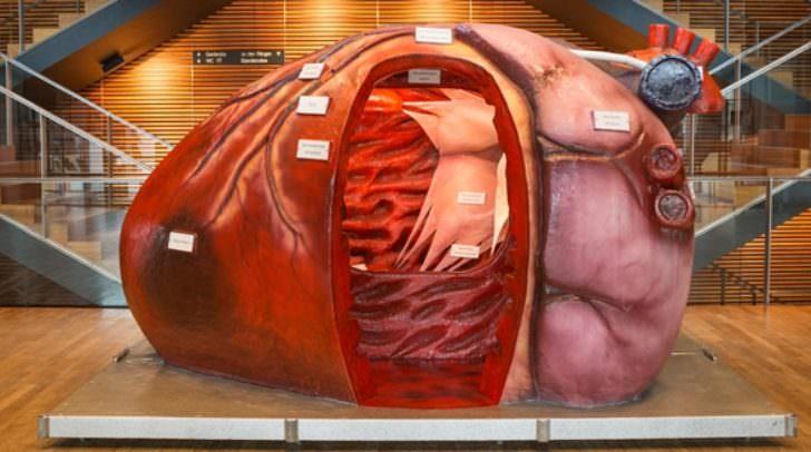 Erlebt das Herz und beschreitet es bei einer Reise durch die vier Herzkammern.