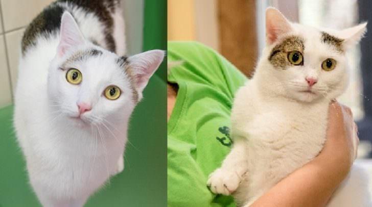 Wer möchte diesen beiden Katzen einen neuen Kuschelplatz schenken?