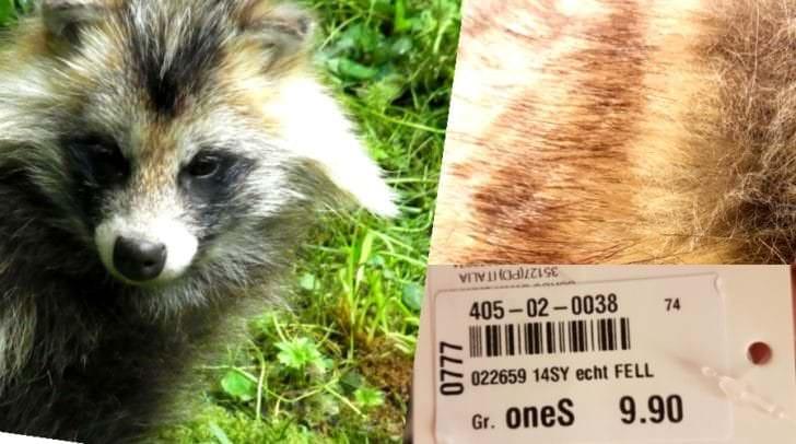 Marderhunde werden zu Tausenden in China für ihr Fell eigens gezüchtet und getötet. Marderfell  um 9,90  als schickes Accessoires?