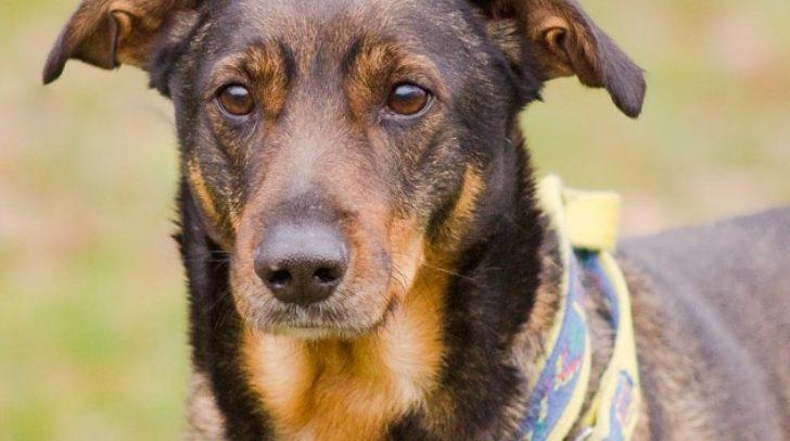 Harte Schale, weicher Kern: Hund Beethoven braucht seine Zeit, bis er jemanden vertrauen kann.