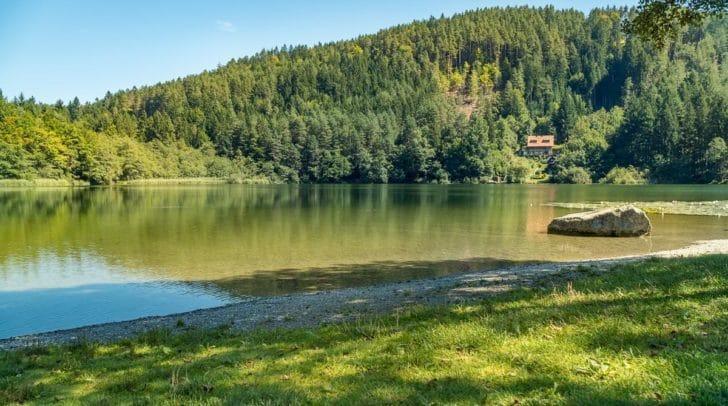 Am Vassacher See wollte der Leser eigentlich nur friedlich angeln, doch dabei war er nicht alleine.