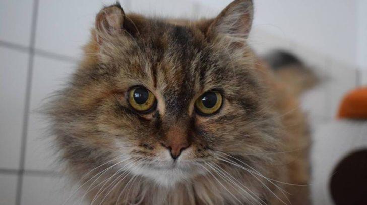 Die schüchterne Katze Milly ist auf der Suche nach einer liebevollen Familie.