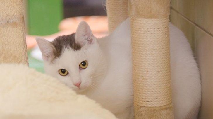 Katze Doris verlor ihr Zuhause, weil ihre Besitzerin verstarb. Nun sucht sie einen neuen Kuschelplatz.