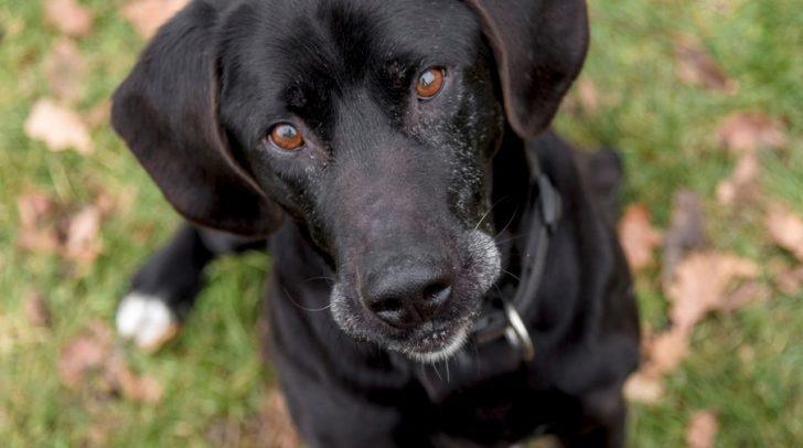 Hund Nero wünscht sich einen neuen Kuschelplatz – am besten ein geräumiges Haus mit großem Garten.