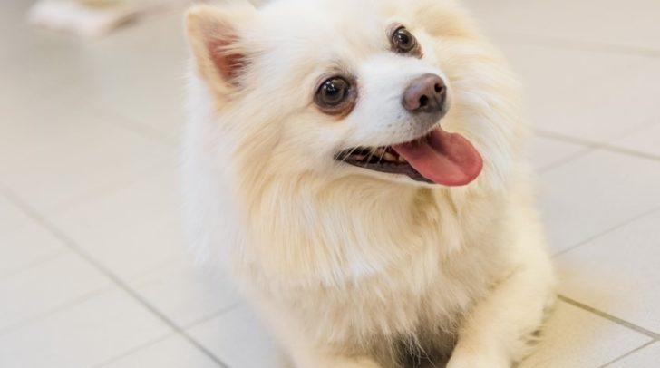 Klein, aber oho – Hund Snow ist auf der Suche nach neuen Besitzern.