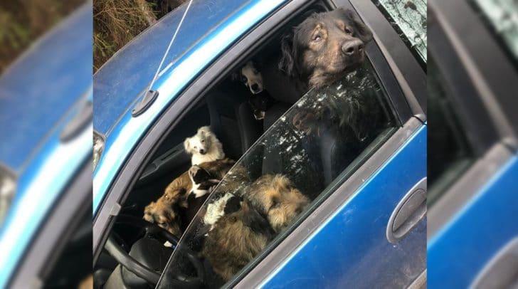 Ein Förster fand zehn weitere Hunde 400 Meter vom Haus der Züchterin entfernt.