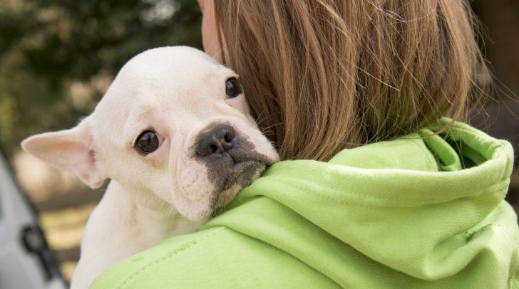 In Villach kümmert man sich um einige der  Vierbeiner. Sobald sie bereit für eine Adoption sind, kann man sich melden.