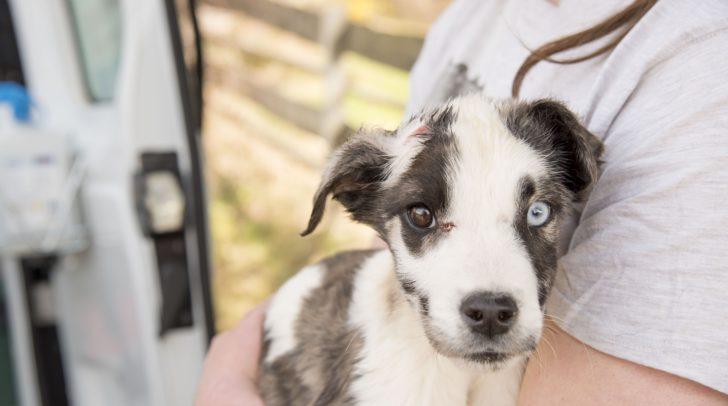 Züchterin gesteht Überforderung - Freiwillige Abgabe weiterer Hunde an das TIKO - Tierschutzkompetenzzentrum