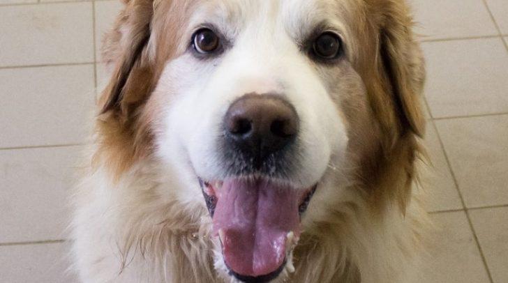 Hund Alfi hofft auf ein schönes zu Hause, in dem er seinen Lebensabend verbringen darf.