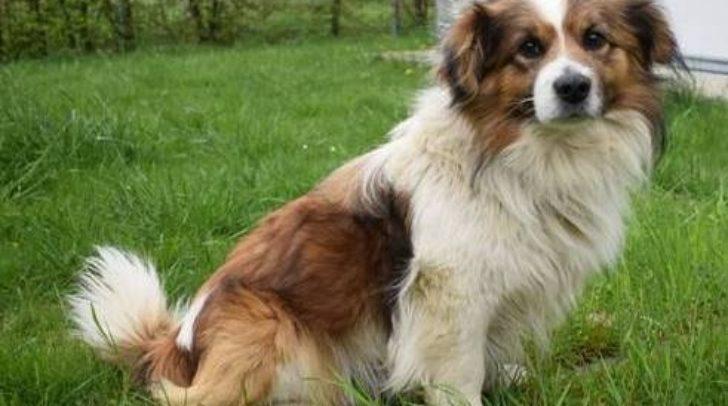 Wer vermisst diesen süßen Hund?