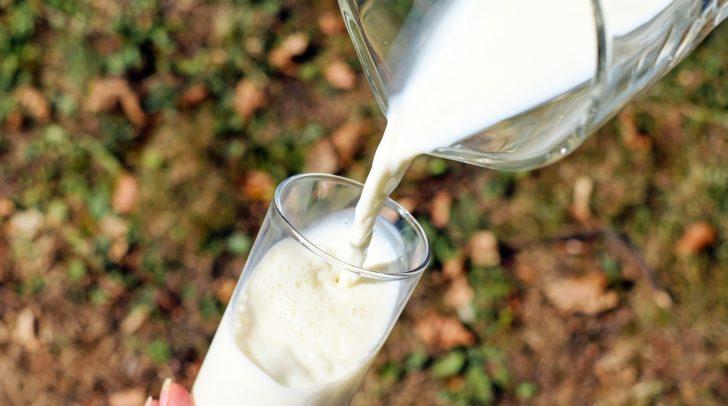 Alle 20 Milchprodukte überzeugen geschmacklich und qualitativ.