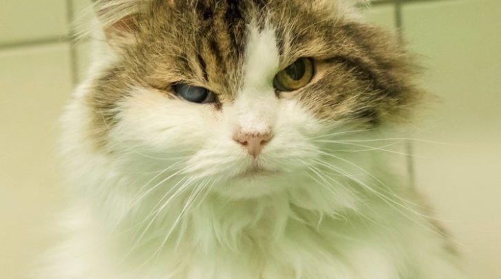 Katze Nelly ist eine echte Menschenfreundin.