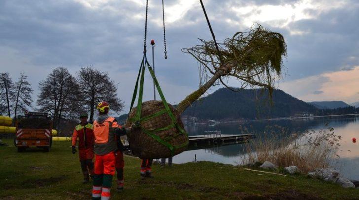 Der bereits große Baum wurde per Kran in die Erde verfrachtet.