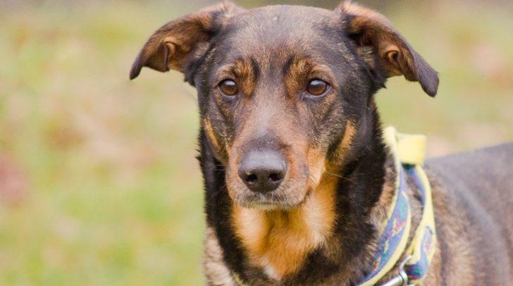 Hund Beethoven sucht nach einem Freund fürs Leben!