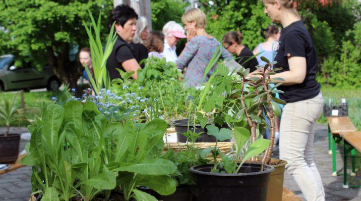 """Mit dem beliebten Pflanzentauschmarkt beginnt das """"Pflanz mich"""" Progamm am 7. Mai ab 16 Uhr im Franz-von-Sales-Zentrum."""