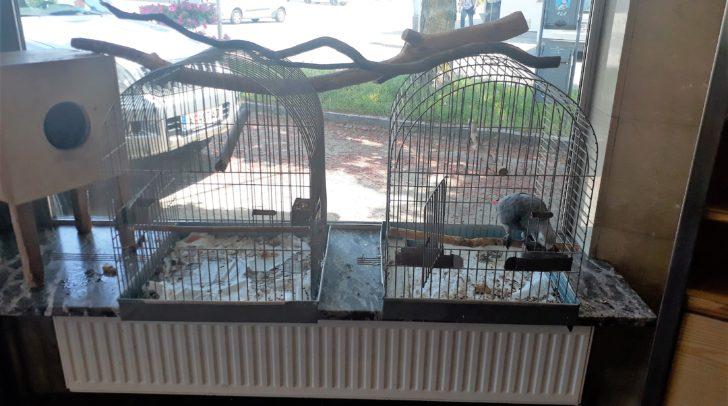 Zwei Käfige dienen abends als Schlafplatz.