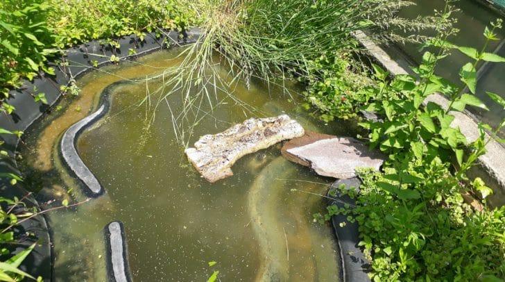 Scheue Tiere: Zwischen den Holzbalken kann man den Kopf einer Wasserschildkröte erkennen.