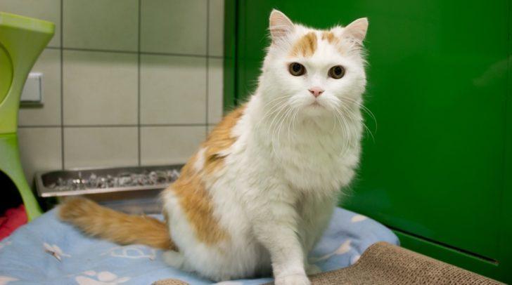 Kater Fuchsi möchte mit dir noch ein entspanntes Katzenleben verbringen.