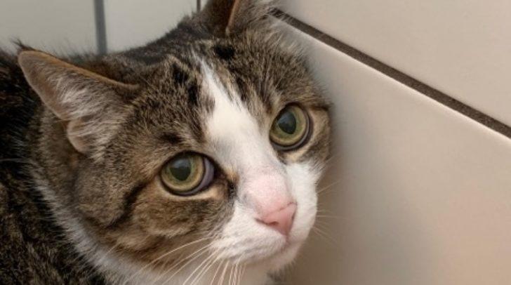 Katze Wiki wünscht sich ein Für-Immer-Platzerl