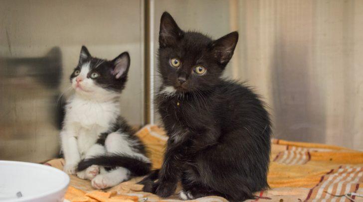 Vor dem TiKo wurden 23 junge Katzen lieblos abgestellt.