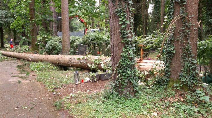 Einer der Bäume landete direkt auf dem Familiengrab.