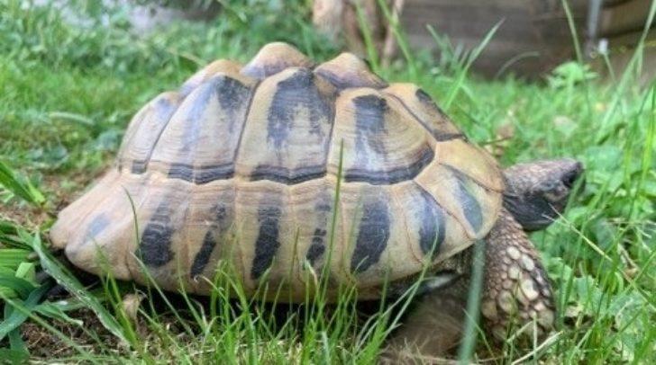 Diese Schildkröte wartet auf ihre Besitzer.