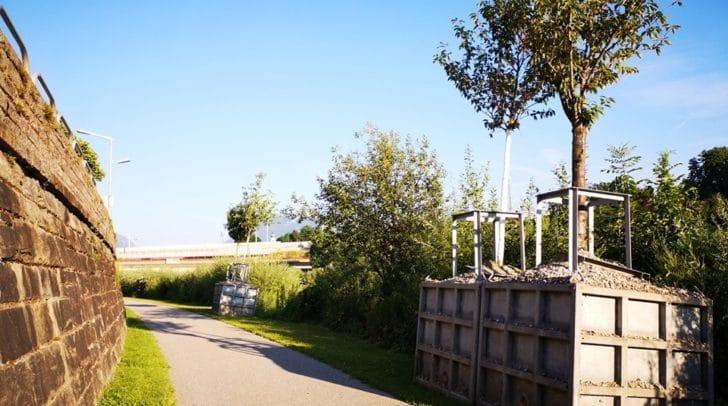 Um die Sicherheit der Bäume zu gewährleisten, werden sie während dem Kirchtag an die Drau verfrachtet.