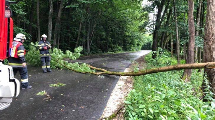 Ein Baum blockierte die Ziegeleistraße und wurde von der FF Haidach entfernt.