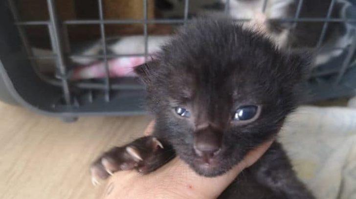 Das Katzen Baby, das im Müll gefunden wurde, hat sich von dem traurigen Vorfall wieder bestens erholt.