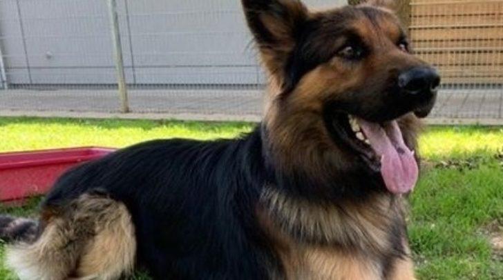 Lennox sucht ein neues Herrchen, das mit ihm die Rettungshundeausbildung fortsetzen möchte.