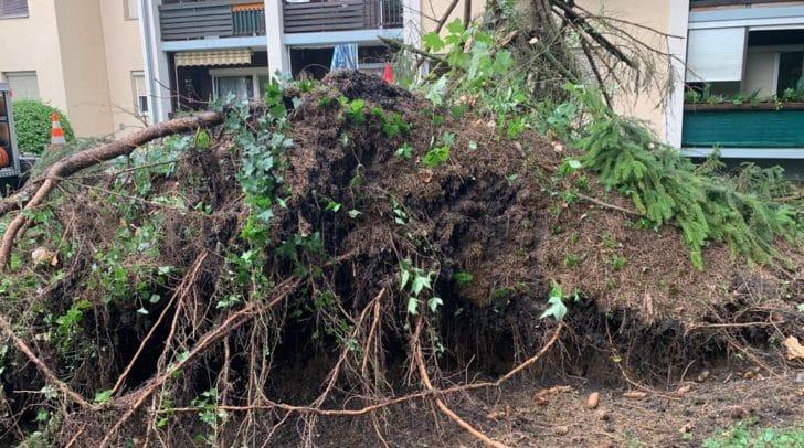 Mehrere Bäume sind im Stadtteil Waidmannsdorf umgestürzt.