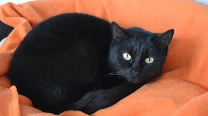 Katzendame Sade liebt die Natur und lange Streicheleinheiten.