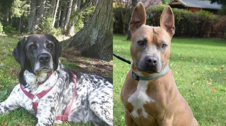 Suki und Pablo warten im Tierheim Villach auf ein neues Zuhause.