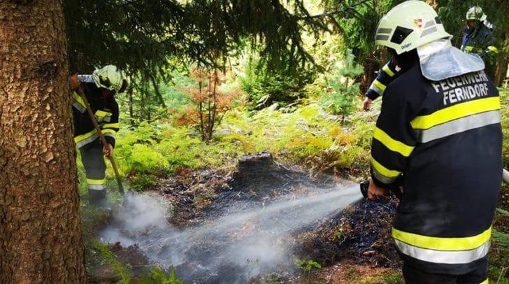 Eine Wanderin entdeckte den Brand beim Pilze sammeln.