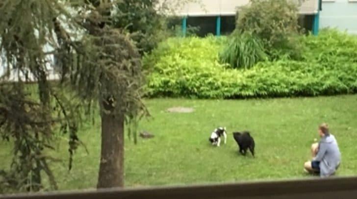 Die Hunde laufen frei im Innenhof herum.